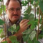 Dennis J. Gray, Ph.D.
